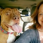 Dog Blog: How Dogs Choose Their Favorite Person